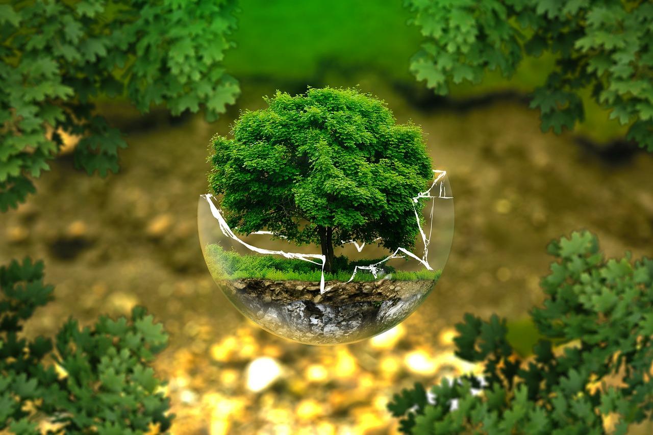 «Единая Россия» в конце октября проведет экологический форум, посвященный проблемам леса
